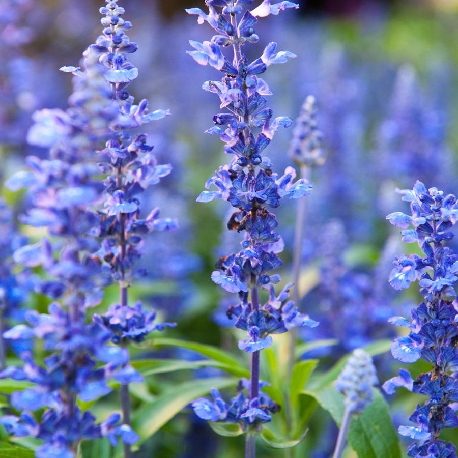 Plantes comestibles et medicinales